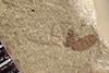 http://mczbase.mcz.harvard.edu/specimen_images/entomology/paleo/large/PALE-36517_Arthropoda.jpg