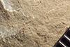 http://mczbase.mcz.harvard.edu/specimen_images/entomology/paleo/large/PALE-36530_Arthropoda.jpg