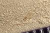 http://mczbase.mcz.harvard.edu/specimen_images/entomology/paleo/large/PALE-36536_Arthropoda.jpg