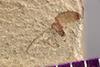 http://mczbase.mcz.harvard.edu/specimen_images/entomology/paleo/large/PALE-36581_Arthropoda.jpg