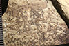 http://mczbase.mcz.harvard.edu/specimen_images/entomology/paleo/large/PALE-36608_Arthropoda.jpg