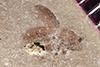 http://mczbase.mcz.harvard.edu/specimen_images/entomology/paleo/large/PALE-36715_Arthropoda.jpg