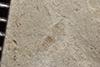 http://mczbase.mcz.harvard.edu/specimen_images/entomology/paleo/large/PALE-36723_Arthropoda.jpg