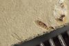 http://mczbase.mcz.harvard.edu/specimen_images/entomology/paleo/large/PALE-36742_Arthropoda.jpg