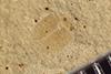 http://mczbase.mcz.harvard.edu/specimen_images/entomology/paleo/large/PALE-36762_Arthropoda.jpg