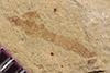 http://mczbase.mcz.harvard.edu/specimen_images/entomology/paleo/large/PALE-36790_Arthropoda.jpg