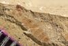 http://mczbase.mcz.harvard.edu/specimen_images/entomology/paleo/large/PALE-36807_Arthropoda.jpg