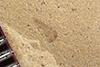 http://mczbase.mcz.harvard.edu/specimen_images/entomology/paleo/large/PALE-36811_Arthropoda.jpg
