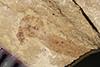http://mczbase.mcz.harvard.edu/specimen_images/entomology/paleo/large/PALE-36845_Arthropoda.jpg