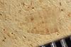 http://mczbase.mcz.harvard.edu/specimen_images/entomology/paleo/large/PALE-36887_Arthropoda.jpg