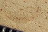 http://mczbase.mcz.harvard.edu/specimen_images/entomology/paleo/large/PALE-36888_Arthropoda.jpg