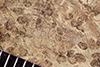 http://mczbase.mcz.harvard.edu/specimen_images/entomology/paleo/large/PALE-37009_Arthropoda.jpg