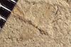 http://mczbase.mcz.harvard.edu/specimen_images/entomology/paleo/large/PALE-37095_Arthropoda.jpg