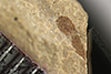 http://mczbase.mcz.harvard.edu/specimen_images/entomology/paleo/large/PALE-37115_Arthropoda.jpg