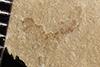 http://mczbase.mcz.harvard.edu/specimen_images/entomology/paleo/large/PALE-37188_Arthropoda.jpg