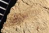 http://mczbase.mcz.harvard.edu/specimen_images/entomology/paleo/large/PALE-37207_Arthropoda.jpg