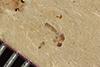 http://mczbase.mcz.harvard.edu/specimen_images/entomology/paleo/large/PALE-37232_Arthropoda.jpg