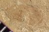http://mczbase.mcz.harvard.edu/specimen_images/entomology/paleo/large/PALE-37261a_Arthropoda.jpg