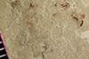 http://mczbase.mcz.harvard.edu/specimen_images/entomology/paleo/large/PALE-37289_Arthropoda.jpg