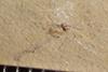 http://mczbase.mcz.harvard.edu/specimen_images/entomology/paleo/large/PALE-37296_Arthropoda.jpg