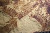 http://mczbase.mcz.harvard.edu/specimen_images/entomology/paleo/large/PALE-37299_Arthropoda.jpg