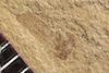 http://mczbase.mcz.harvard.edu/specimen_images/entomology/paleo/large/PALE-37318_Arthropoda.jpg