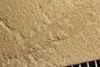 http://mczbase.mcz.harvard.edu/specimen_images/entomology/paleo/large/PALE-37324_Arthropoda.jpg