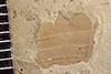 http://mczbase.mcz.harvard.edu/specimen_images/entomology/paleo/large/PALE-37476_Arthropoda.jpg