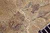 http://mczbase.mcz.harvard.edu/specimen_images/entomology/paleo/large/PALE-37481_Arthropoda.jpg
