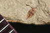 http://mczbase.mcz.harvard.edu/specimen_images/entomology/paleo/large/PALE-37548_Arthropoda.jpg