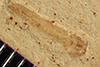 http://mczbase.mcz.harvard.edu/specimen_images/entomology/paleo/large/PALE-37556_Arthropoda.jpg