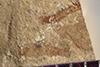 http://mczbase.mcz.harvard.edu/specimen_images/entomology/paleo/large/PALE-37615_Arthropoda.jpg