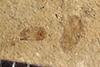 http://mczbase.mcz.harvard.edu/specimen_images/entomology/paleo/large/PALE-37633_Arthropoda.jpg