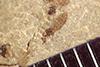 http://mczbase.mcz.harvard.edu/specimen_images/entomology/paleo/large/PALE-37761_Arthropoda.jpg