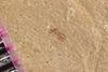 http://mczbase.mcz.harvard.edu/specimen_images/entomology/paleo/large/PALE-37781_Arthropoda.jpg