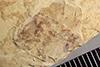 http://mczbase.mcz.harvard.edu/specimen_images/entomology/paleo/large/PALE-37792_Arthropoda.jpg