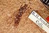 http://mczbase.mcz.harvard.edu/specimen_images/entomology/paleo/large/PALE-377_Litobrochus_externatus_holotype.jpg