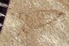 http://mczbase.mcz.harvard.edu/specimen_images/entomology/paleo/large/PALE-37815_Arthropoda.jpg