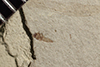 http://mczbase.mcz.harvard.edu/specimen_images/entomology/paleo/large/PALE-37886_Arthropoda.jpg