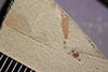 http://mczbase.mcz.harvard.edu/specimen_images/entomology/paleo/large/PALE-37902_Arthropoda.jpg