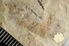 http://mczbase.mcz.harvard.edu/specimen_images/entomology/paleo/large/PALE-37949_Arthropoda.jpg