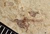 http://mczbase.mcz.harvard.edu/specimen_images/entomology/paleo/large/PALE-37970_Arthropoda.jpg