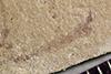 http://mczbase.mcz.harvard.edu/specimen_images/entomology/paleo/large/PALE-38014_Arthropoda.jpg