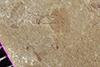 http://mczbase.mcz.harvard.edu/specimen_images/entomology/paleo/large/PALE-38018_Arthropoda.jpg
