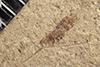 http://mczbase.mcz.harvard.edu/specimen_images/entomology/paleo/large/PALE-38097_Arthropoda.jpg