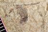 http://mczbase.mcz.harvard.edu/specimen_images/entomology/paleo/large/PALE-38270_Arthropoda.jpg