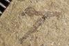 http://mczbase.mcz.harvard.edu/specimen_images/entomology/paleo/large/PALE-38274_Arthropoda.jpg