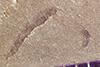 http://mczbase.mcz.harvard.edu/specimen_images/entomology/paleo/large/PALE-38442_Arthropoda.jpg