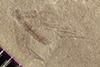 http://mczbase.mcz.harvard.edu/specimen_images/entomology/paleo/large/PALE-38499_Arthropoda.jpg