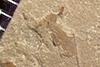 http://mczbase.mcz.harvard.edu/specimen_images/entomology/paleo/large/PALE-38508_Arthropoda.jpg